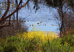 A Colorful Afternoon at the Wetlands to celebrate Earth Day 4-22-2009! by Susan Gary (Sue)