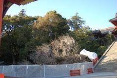 mark tree 02