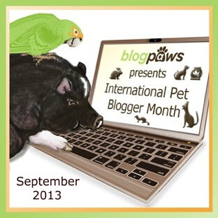 InternationalPetBloggerMonth