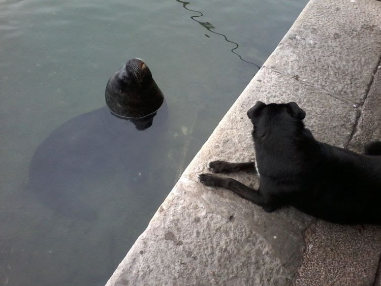 Dog and seawolf, Punta el Este 2014 photo 20140803_120343_zps92313662.jpg
