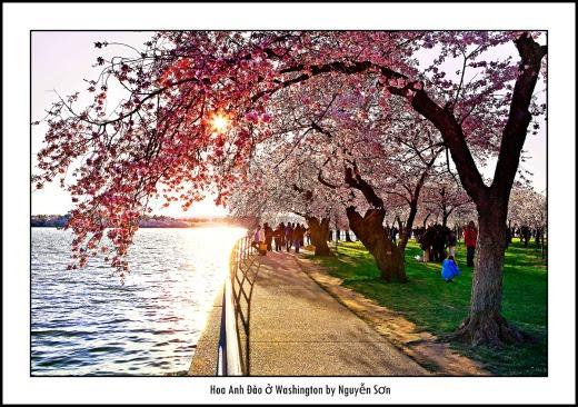 001 Mùa Xuân Washington