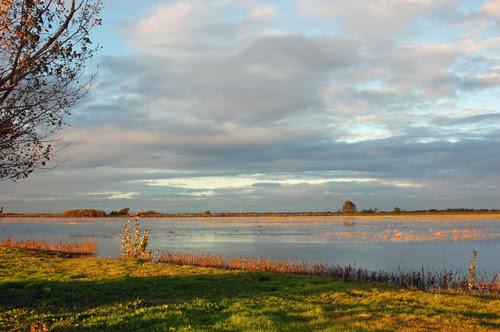 7painterly-sunset-over-marsh.jpg