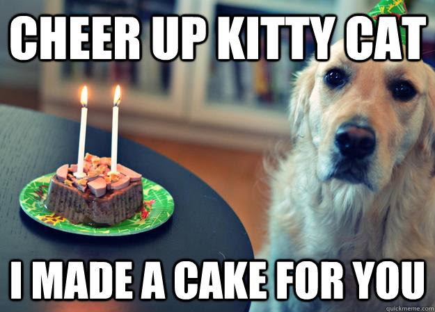 Cheer Up Kitty Cat I Made A Cake For You Sad Birthday Dog Quickmeme