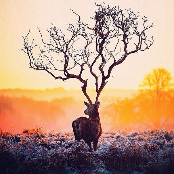 surreal-photography-robert-jahns-5