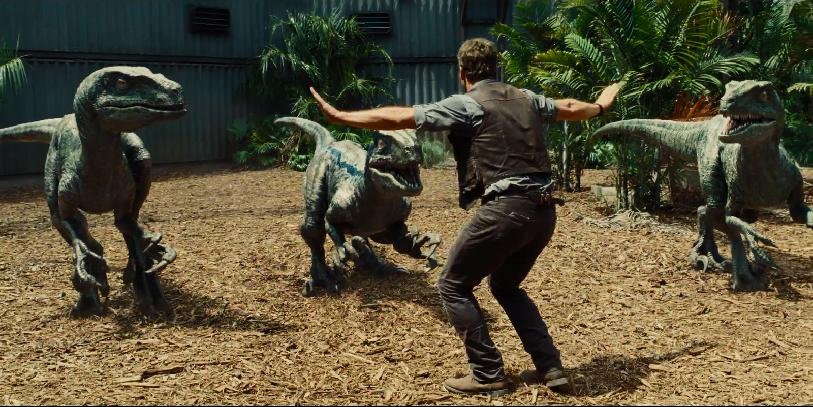http://cinescopia.com/wp-content/uploads/2015/06/chris-pratt-velociraptor-jurassic-world-Gamers.jpg
