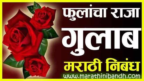 फुलांचा राजा गुलाब मराठी निबंध | Fulancha raja gulab Marathi Nibandh