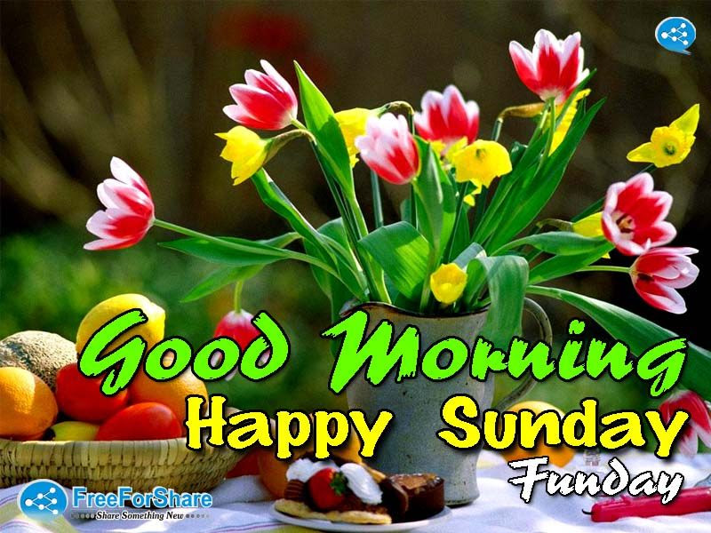 Good Morning Happy Sunday Funday Pictures Photos And Images For
