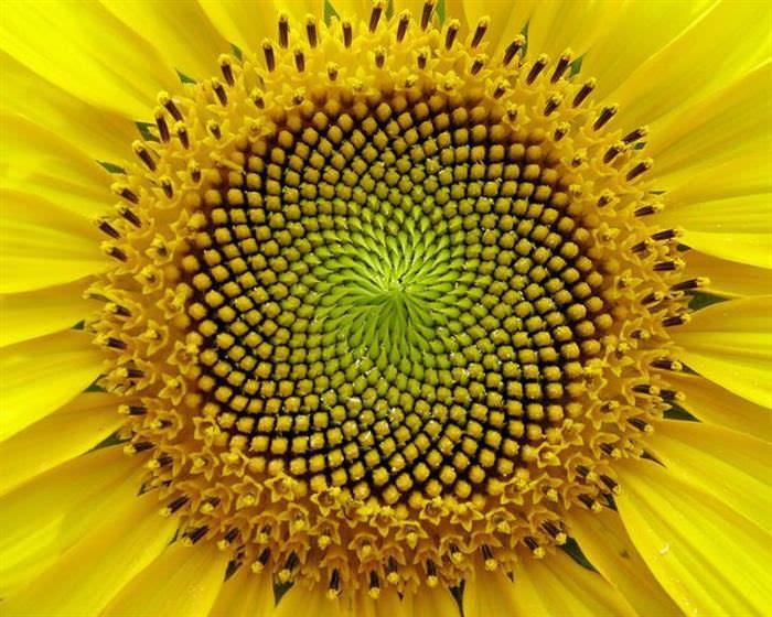 Naturaleza Geométrica