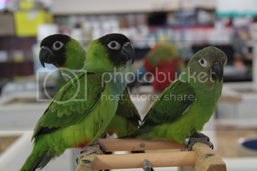 colorful parrots photo:  IMG_3759.jpg