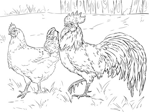 Hen and Rooster coloring page  SuperColoring.com