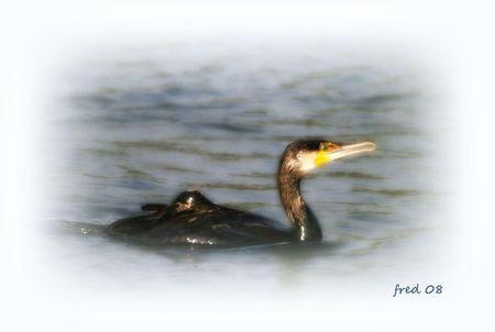 cormoran_septembrepiksign_e