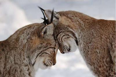 Animal Love