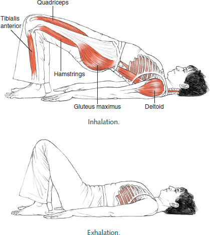 Dwi Pada Pitham Two-Legged Table © Leslie Kaminoff's Yoga Anatomy  B E N E F I T S — Opens the chest and shoulders and brings awareness to the spine. — Opens the Thoracic spine. — Strengthens the legs. — Lengthens the hip flexors. — Tones the upper back muscles. — Improves digestion — Helps menopause — Reduces anxiety, fatigue, backache, headache & insomnia — Therapeutic for asthma, HBP, osteoporosis & sinusitis  ❤ Yoga Inspiration Buy the book here http://amzn.to/1ctMdtp Like Yoga Inspiration on Facebook http://www.facebook.com/pages/p/265946723498660