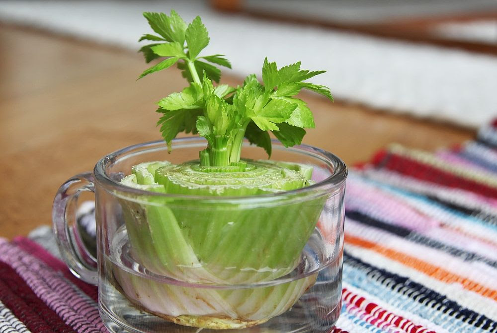 13 Vegetables That You Can Regrow Again And Again --> Celery