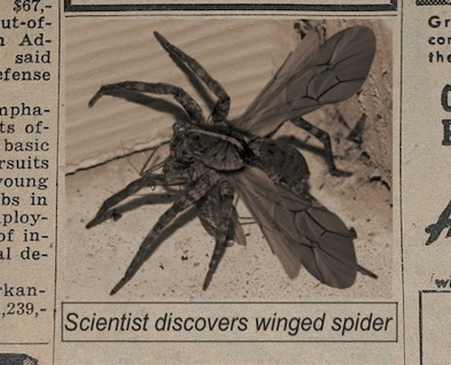 Cientistas descobrem aranhas voadoras!