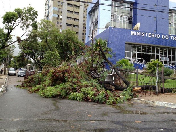 Árvore da Superintendência Regional de Trabalho e Emprego do Recife caiu e bloqueou rua. (Foto: Fernando Rêgo Barros / TV Globo)