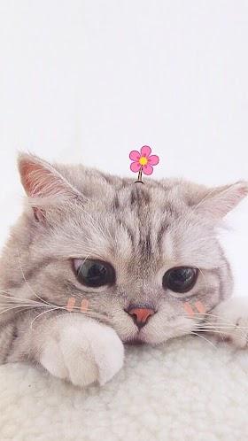 Kucing Lucu Tumblr