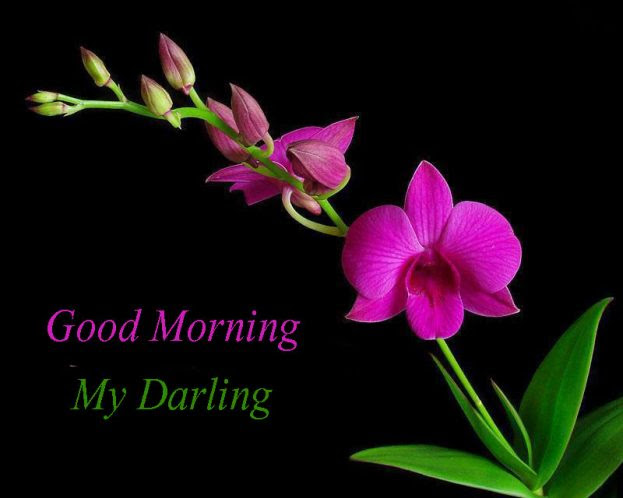 Good Morning My Darling Flowers Images Good Morning Images Quotes