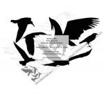 Birds Group of Silhouettes Yard Art Woodworking Pattern - fee plans from WoodworkersWorkshop® Online Store - birds,seagulls,animals,wildlife,yard art,painting wood crafts,scrollsawing patterns,drawings,plywood,plywoodworking plans,woodworkers projects,workshop blueprints