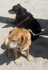 LolaSophie_dogpark_42912c