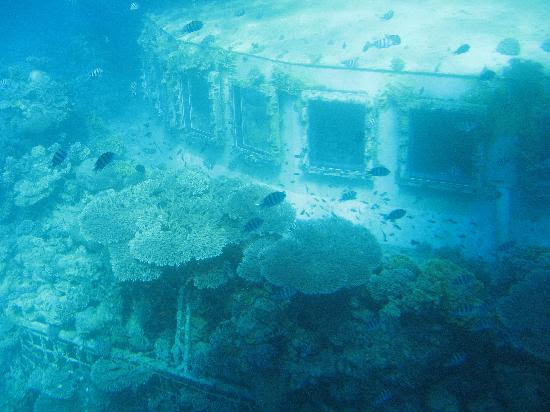 http://media-cdn.tripadvisor.com/media/photo-s/01/0a/65/44/eilat-underwater-observatory.jpg