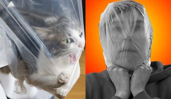 Animais são sufocados por sacolas plásticas