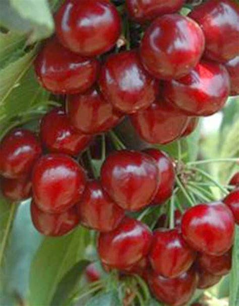 kumpulan foto buah buahan terlengkap aneka gambar jenis