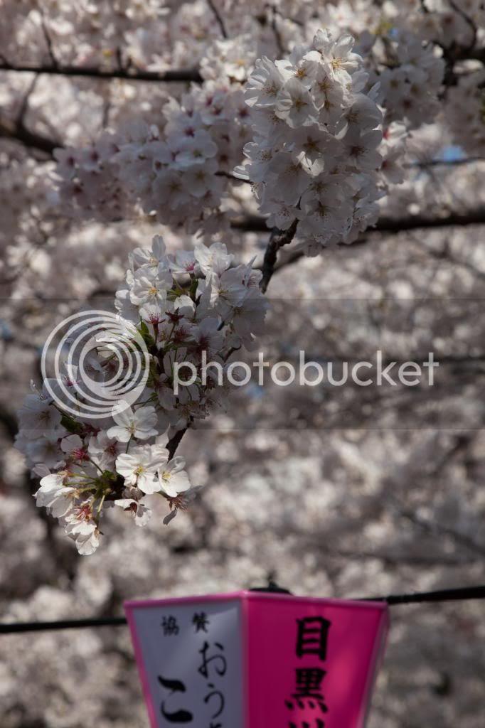 photo 20140401-IMG_2271_zps49690791.jpg