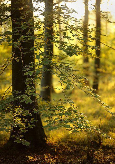 ~Autumn~ Golden Hour, Friston Forest by Alan Mackenzie