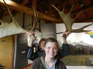 horns or antlers
