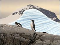 Pinguins em geleira em derretimento