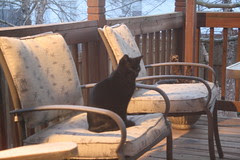 Visitor on the back porch