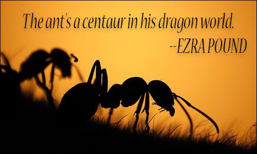 Ants Quotes