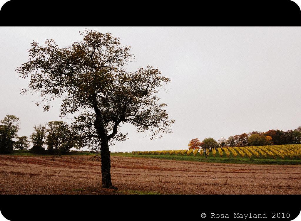 Fall Walk 6.1 bis
