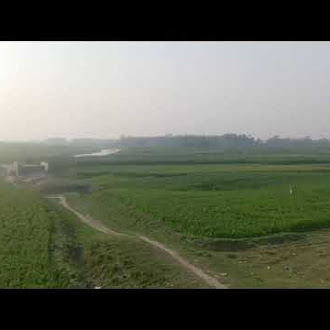train view natural railway runing view royalty free video