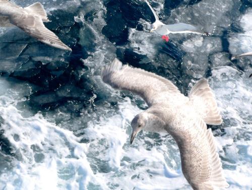 飛鳥與流冰