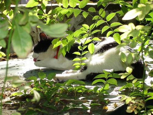 Missy washing in the sun