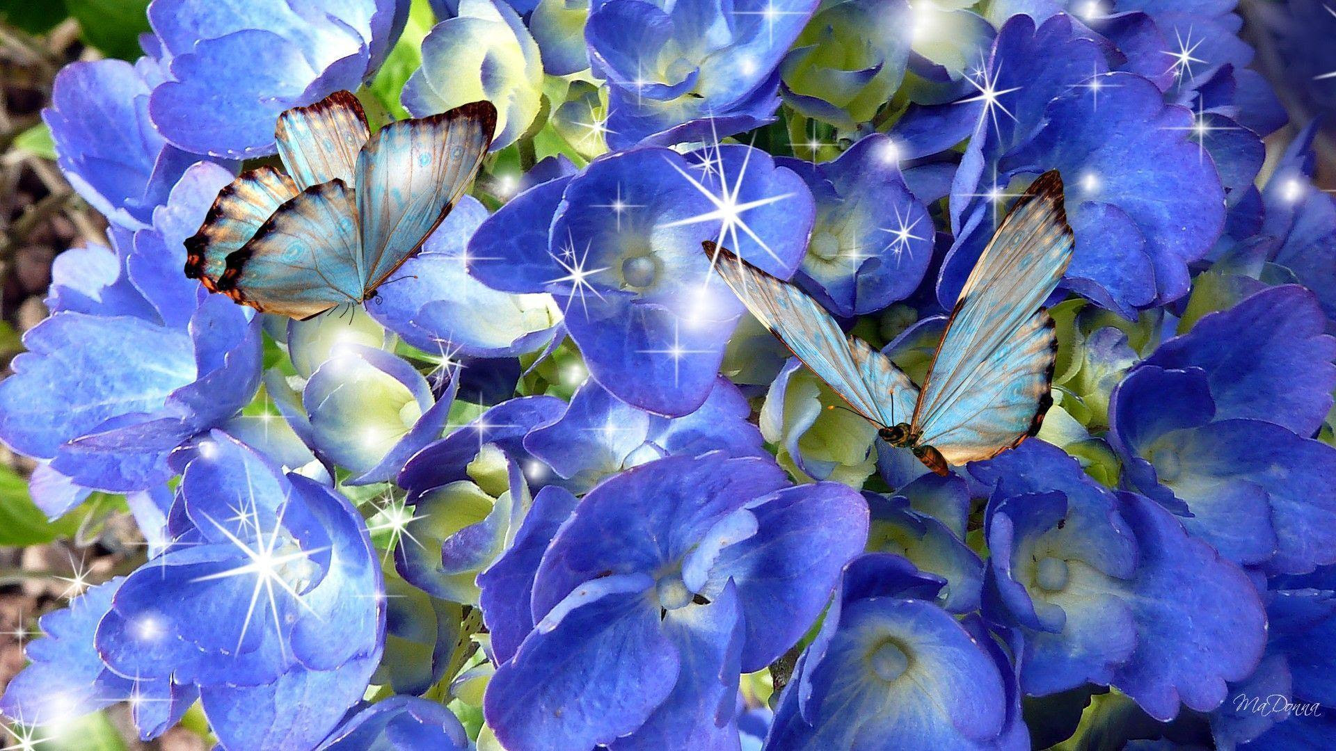 Butterfly Wallpapers HD - Wallpaper Cave