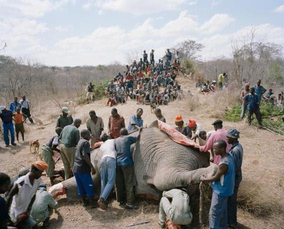http://images.corriereobjects.it/gallery/Cronache/2010/03_Marzo/elefante/1/img_1/04_Elephant_Story-Copyright_David_Chancellor_672-458_resize.jpg