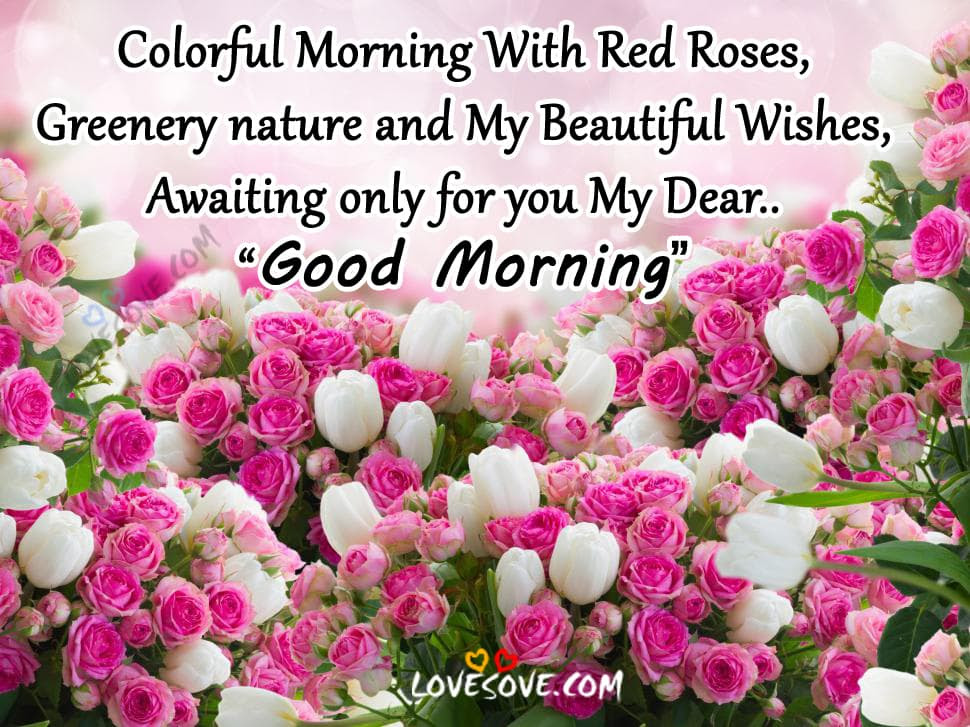 Colorful Morning With Red Roses Good Morning Wishes Images