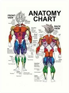 Diagram Of Body Muscles And Names / Solved: Identify Each Of The Numbered Muscles In This Diag ... : There are around 650 skeletal muscles within the typical human body.