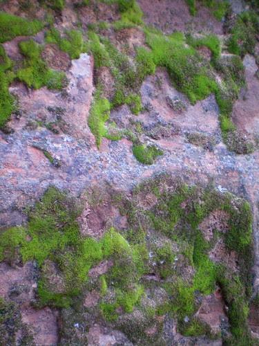 Bit of green in the desert