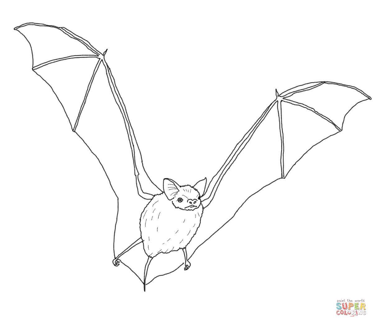 Große Braune Fledermaus