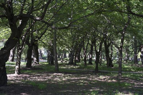 高田公園2-1