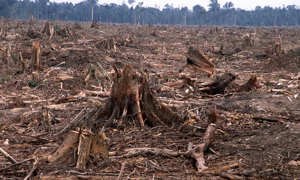 plant and deforestation Problem: extinction of plant and animal species massive extinctions have occurred five times during the earth's history, the last one was the extinction of the dinosaurs, 65 million years ago scientists are calling what is occurring now, the sixth mass extinction.
