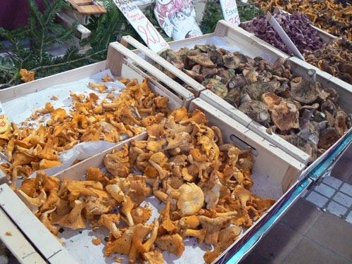 champignons 2.jpg