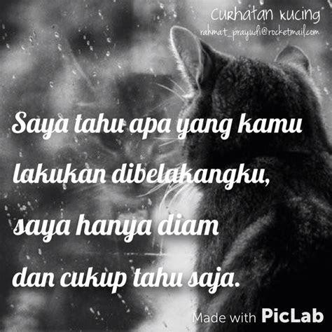 curhatan kucing images  pinterest cat quotes