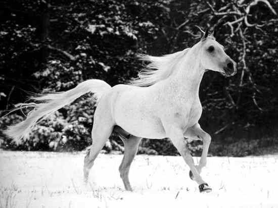 White Horse2