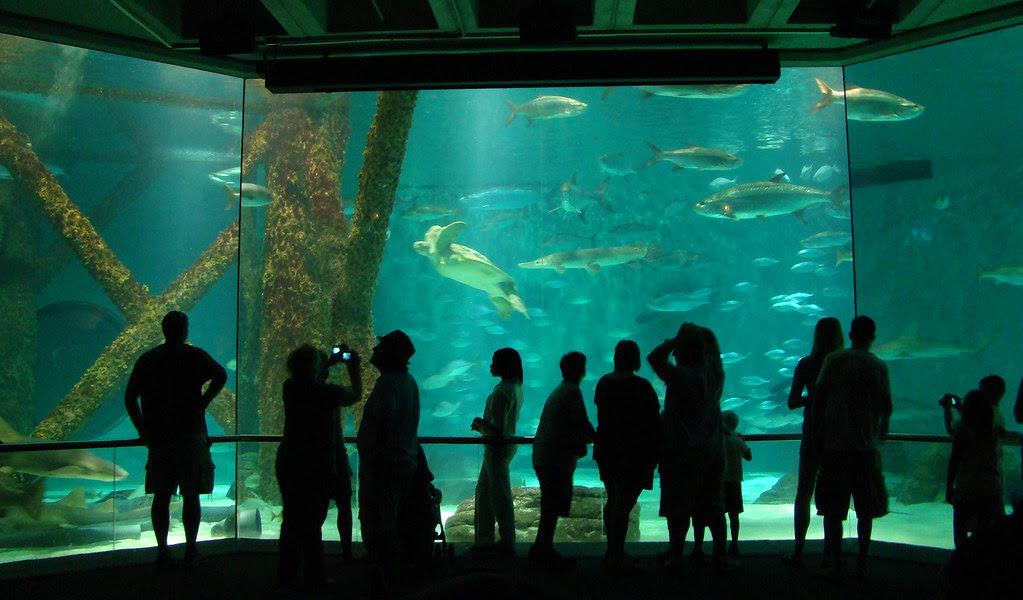 DSC06319 Audubon Aquarium