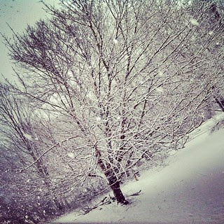 Yup, it's snowing! #snow #snowflakes #newengland #tree #winterwonderland #letitsnow